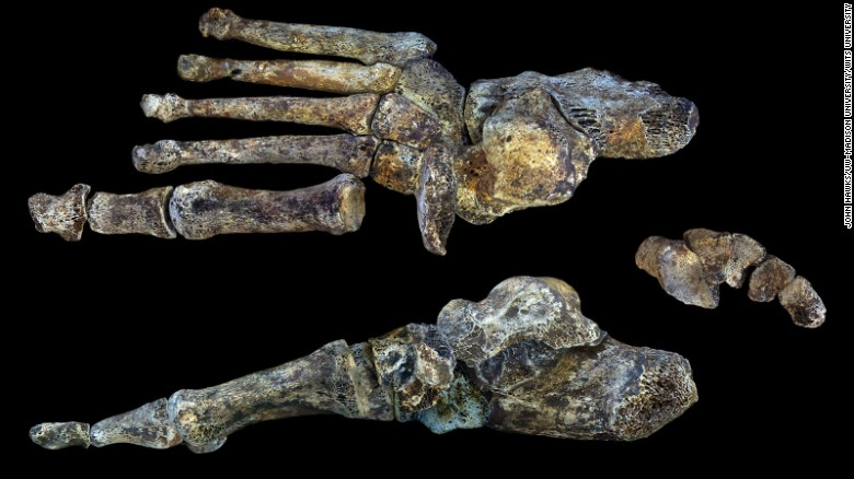 150910105558-restricted-homo-naledi-foot-wits-exlarge-169