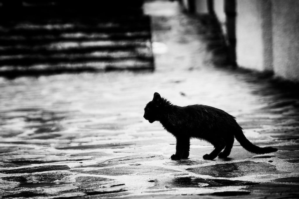 Curiosity-Killed-The-Cat-Why-Cats-Hate-Water