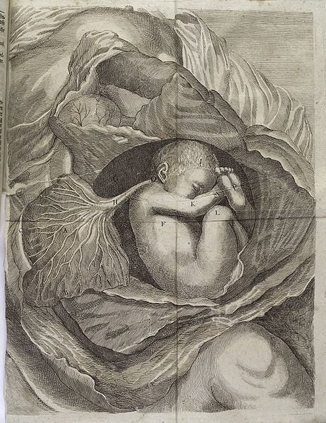 Diagram_of_a_fetus,_lying_on_its_side,_in_an_opened_womb_Wellcome_L0038228
