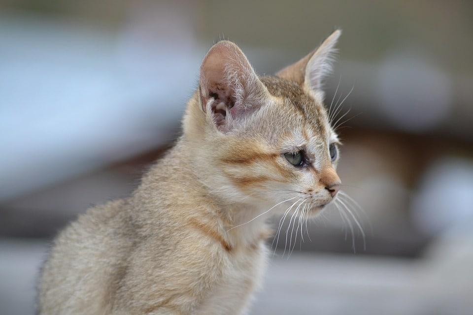 cat-1107450_960_720