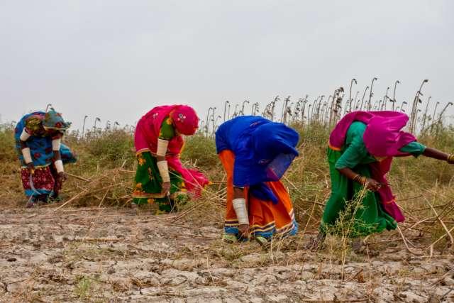 pakistan-farmers
